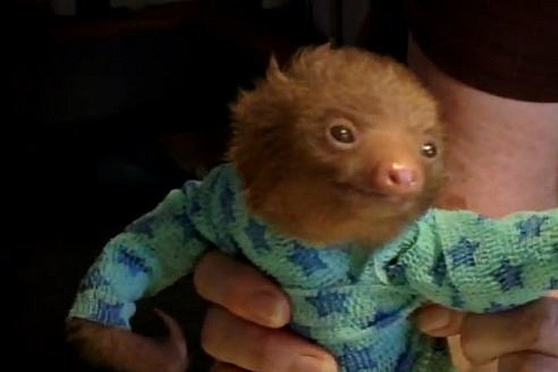Baby sloth onesie
