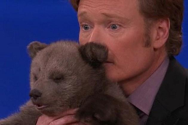 Conan Bear