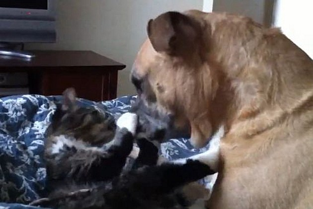 Dog and cat fight