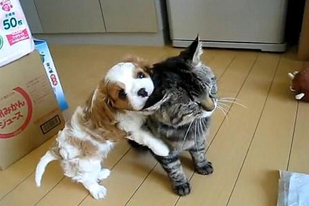Dog pets cat