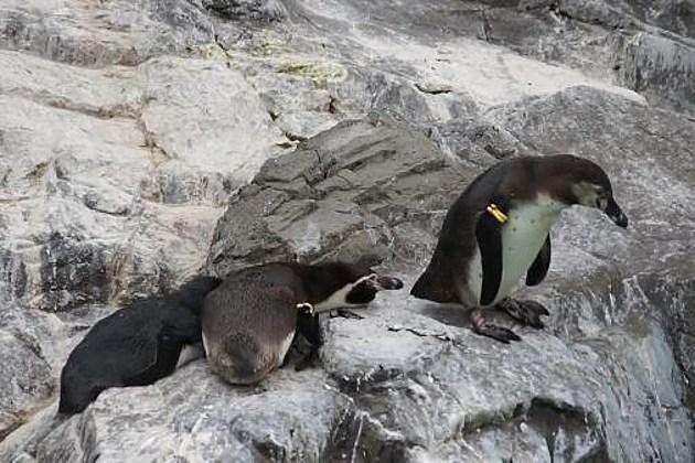Penguin prank