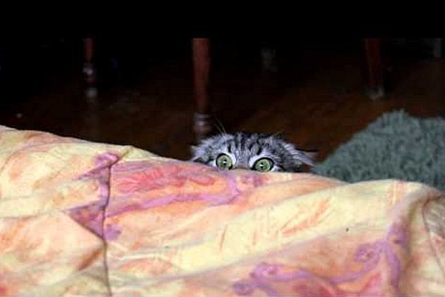 best cat videos 2012