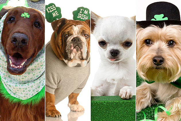St. Patrick's Day dog costumes