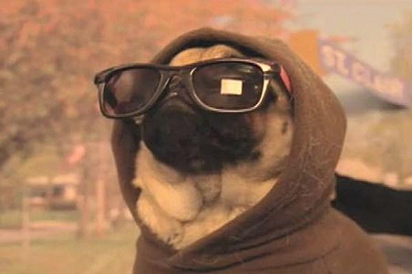 Gangster Glasses