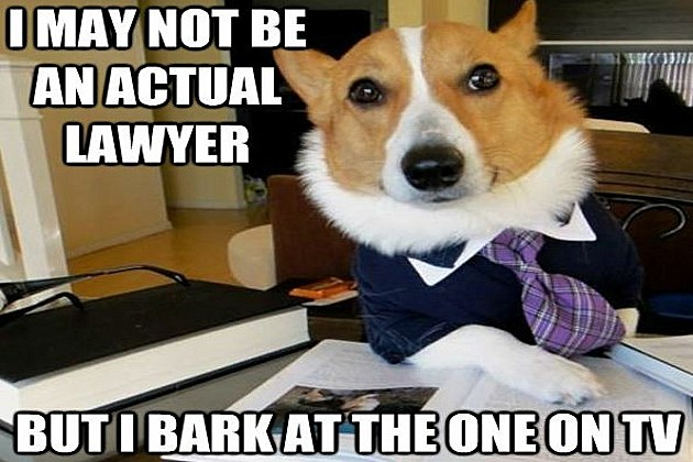 Lawyer Dog Memes 39 Lawyer Dog 39 Meme Has a Nose