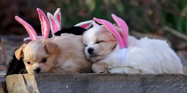 Puppies celebrating Easter