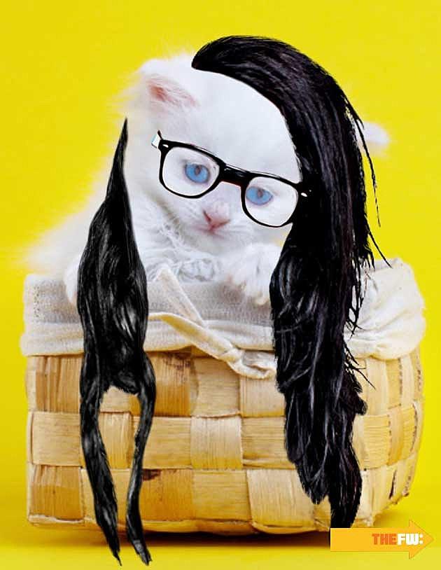 Animals with Skrillex Hair Cat in Basket