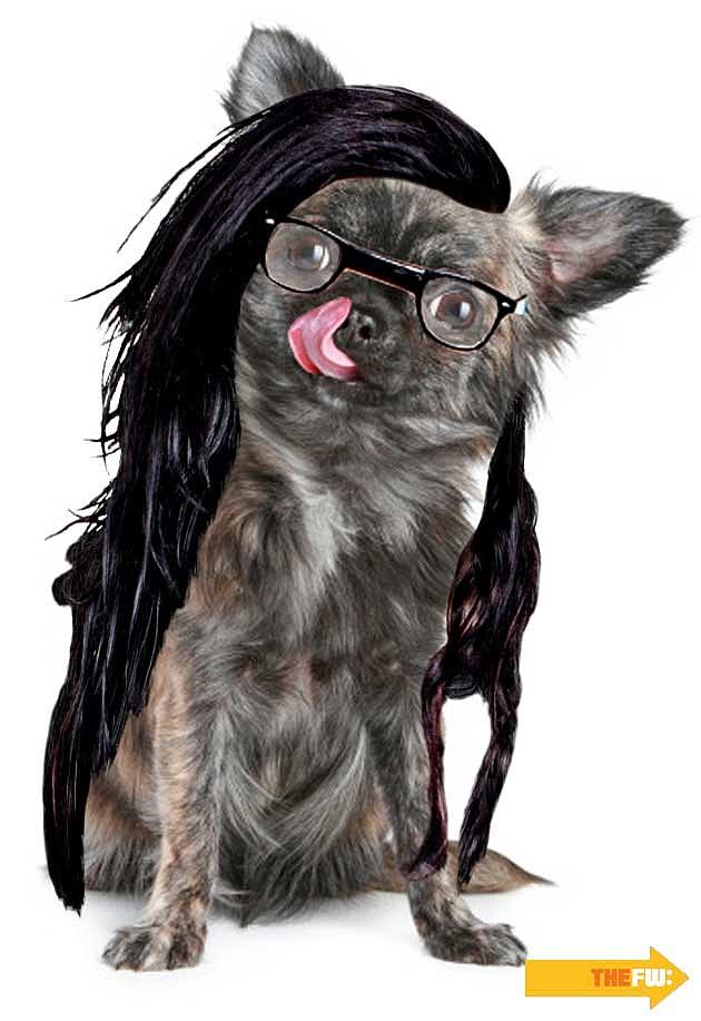 Animals with Skrillex Hair Dog