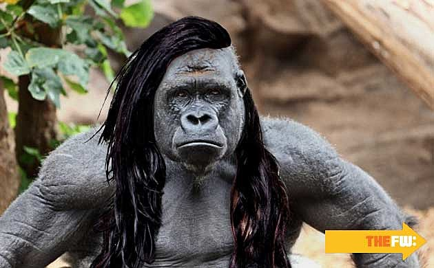 Animals with Skrillex Hair Gorilla