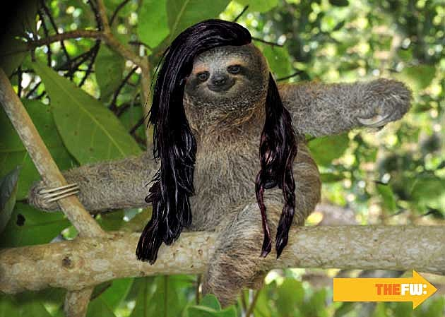 Animals with Skrillex Hair Sloth
