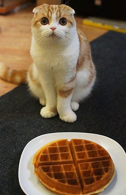 Waffles and Waffle
