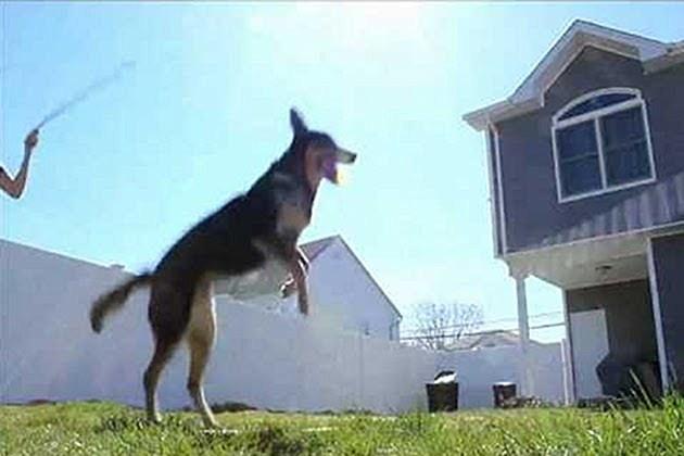 Dog Jump Ropes