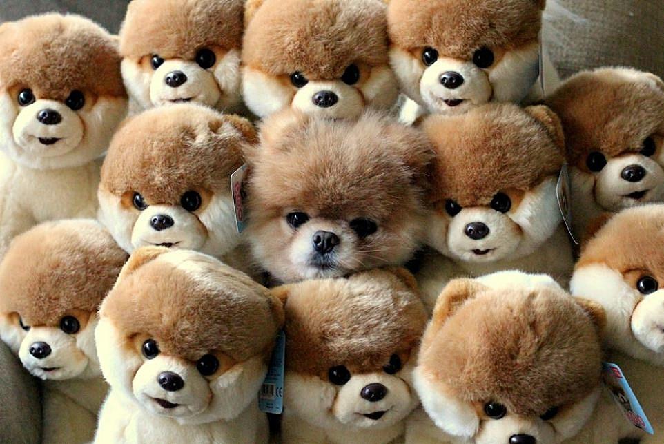 Teddy bear 20 - Teddy Bears