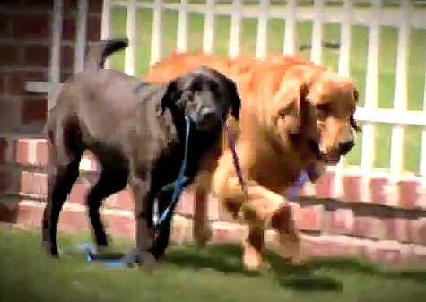 Dog leading dog