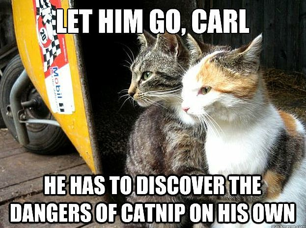 Restraining Cats