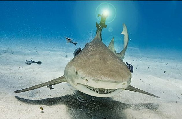Shark with laser beem