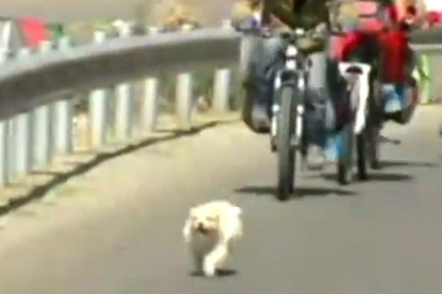 Stray Dog Follows Cyclists on 1,100 Mile Journey