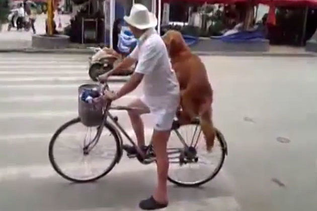 Dog cycle seat