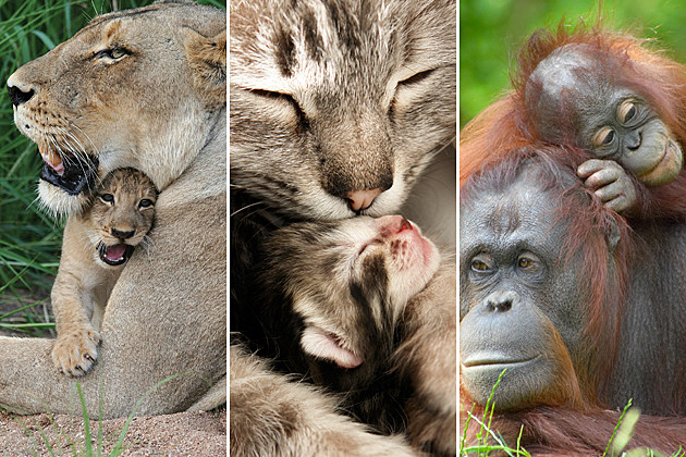 Mother's Day - Baby Animals with Their Moms