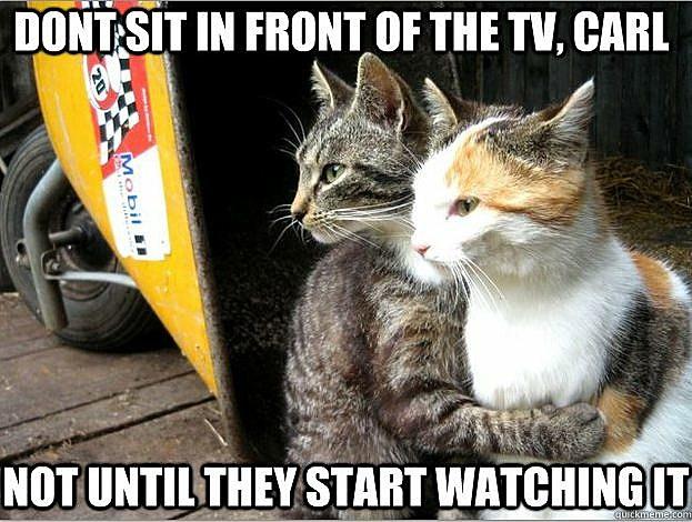 restraing cats