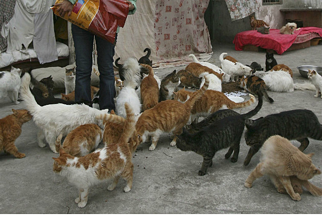stray cats being fed in Shanghai