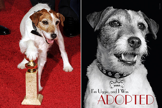 Uggie, 'The Artist' dog, penning memoirs