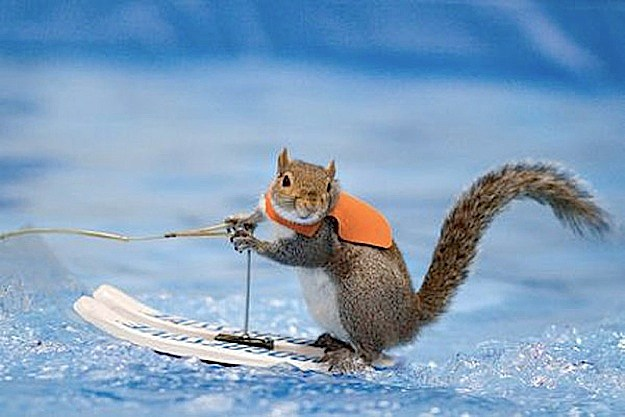 Waterskiing Squirrel on 'America's Got Talent'