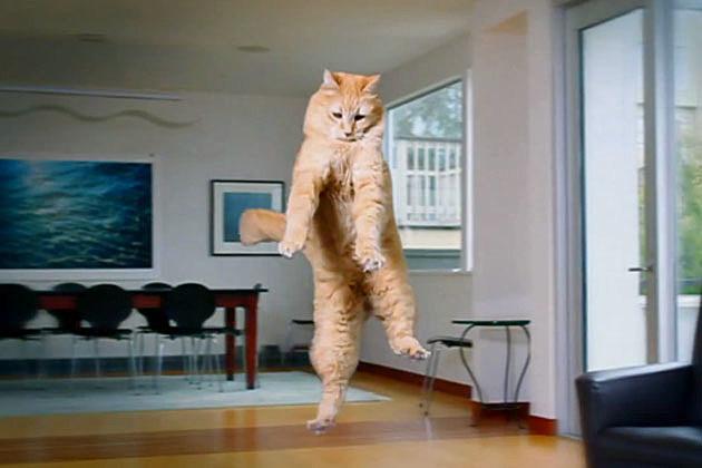 ASPCA Hovercat
