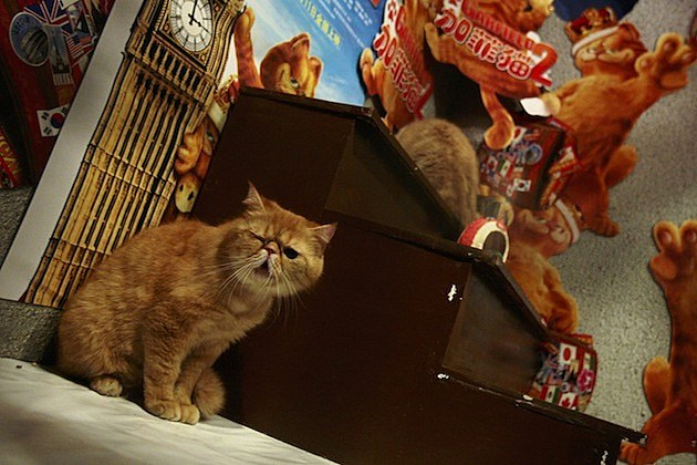 "Exotic Shorthair Cats Are Shown To Promote Movie ""Garfield"""