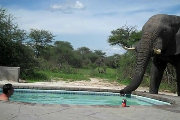 Elephant Shows Up Uninvited to a Pool Party