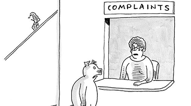 pig at a complaint department