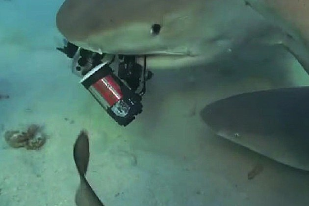 shark eating camera