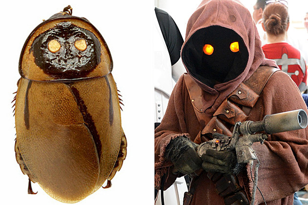 Cockroaches or Jawas?