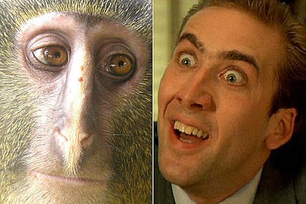 Monkey Nic Cage