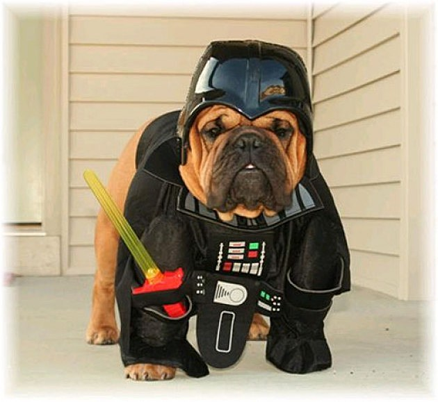 10 dogs dressed as star wars characters. Black Bedroom Furniture Sets. Home Design Ideas