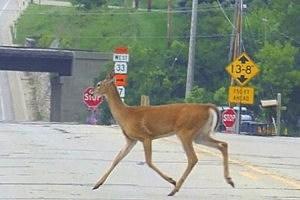 deer crossing signs