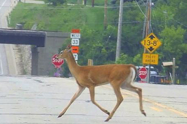 deer crossing signs