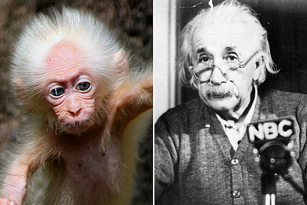 einstein monkey