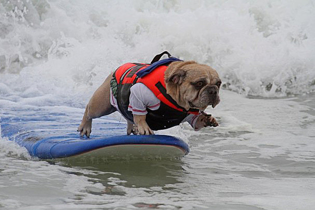 epic surf dog