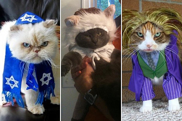 Cat Halloween Costumes Cats