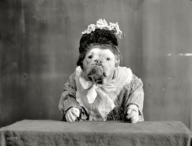 Old-Time Dog