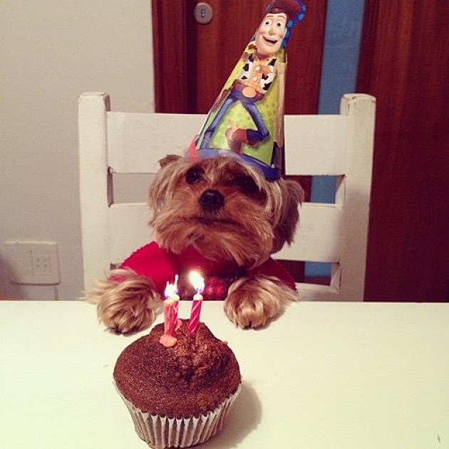 Brighten Your Day With 10 Dogs Celebrating Their Birthdays