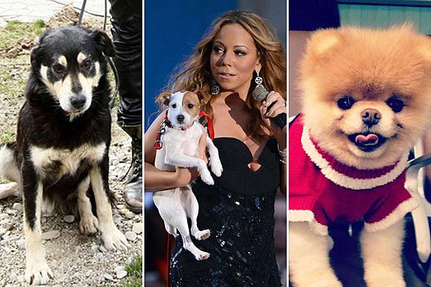 Famous Dog Christmas
