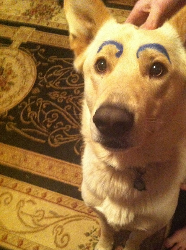 12 Awesome Dogs With Human Eyebrows