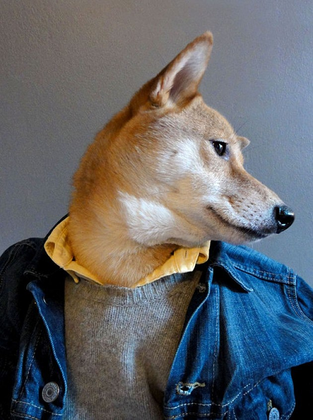 Dog Menswear
