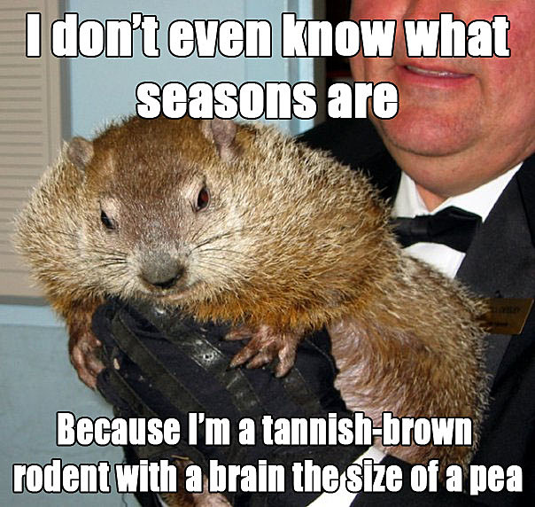 groundhog2 8 groundhog day memes from punxsutawney phil,Funny Groundhog Meme