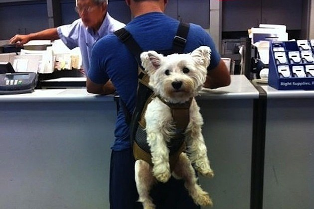 Dog Backpacks