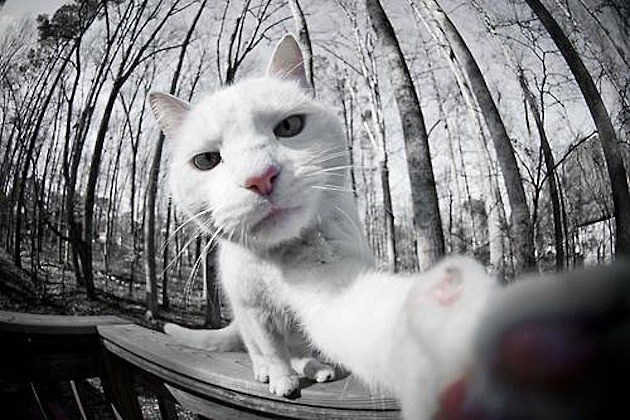 Animal Selfie