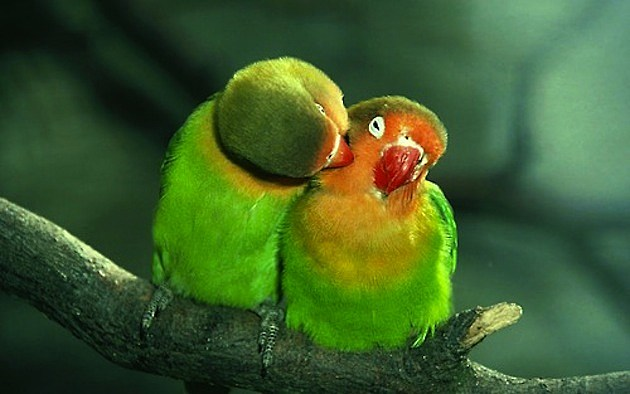 Romantic Animals