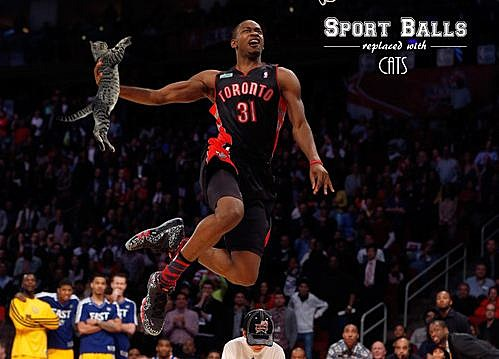 Sports Balls Replaced With Cats 3